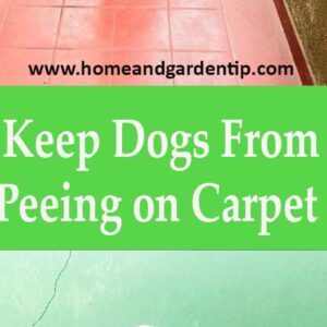 How to Keep Dogs From Peeing on Carpet    Home and Garden Tip