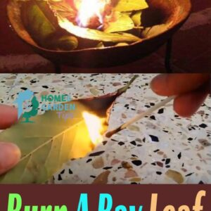 Burn A Bay Leaf In Your House. The Reason?