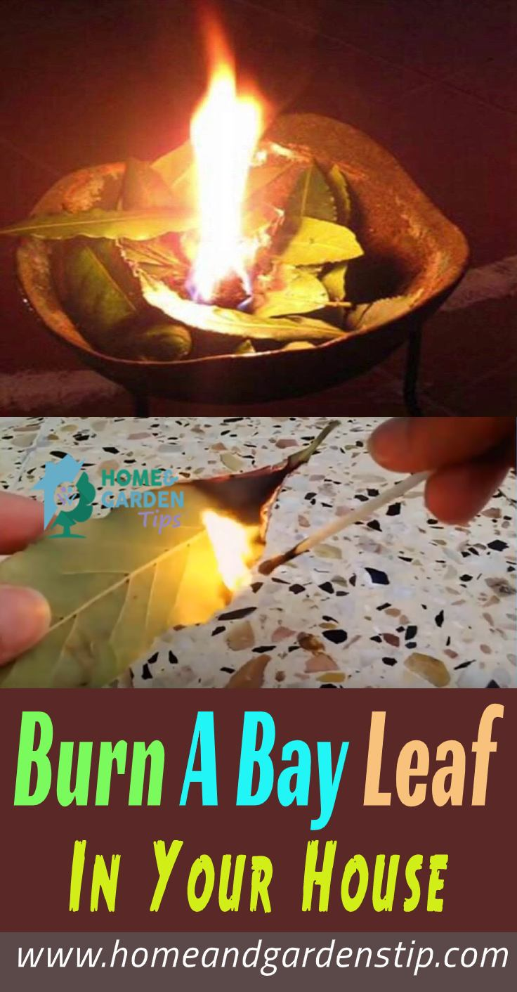 You are currently viewing Burn A Bay Leaf In Your House. The Reason?