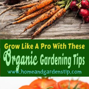 The best fertilizer for gardens Grow Like A Pro With These Organic Gardening Tips