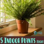 These 5 Indoor Plants Fight Sadness and Are Proven To Make You Happier