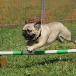 Dog Training – Basic Guidelines For New Dog Owners