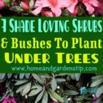 7 Shade Loving Shrubs And Bushes To Plant Under Trees