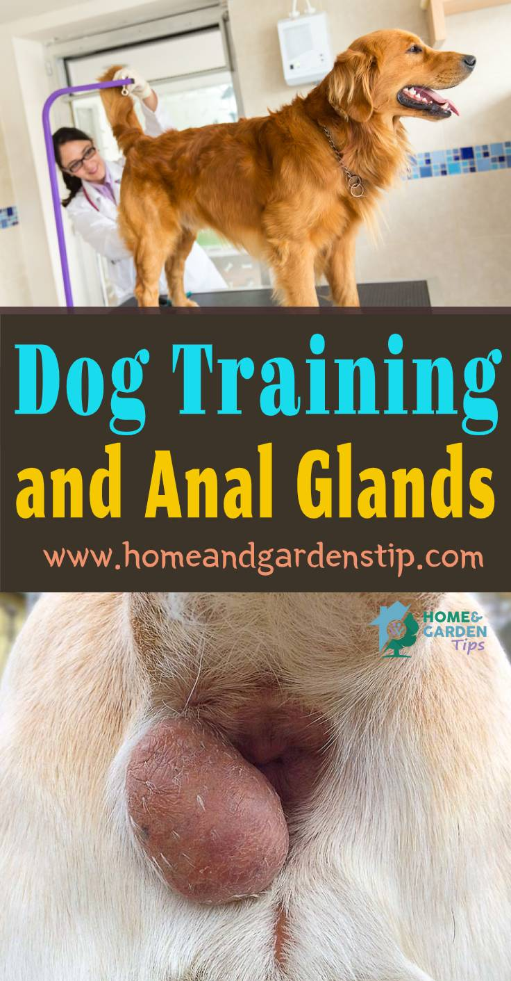 Dog Training and Anal Glands