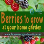 Berries to grow at your home garden
