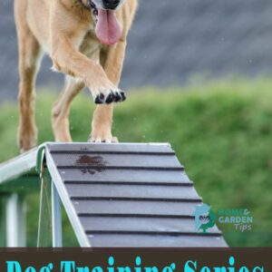 Dog Training Series – Make Dog Training With Your Children Fun, Not a Chore!
