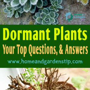 Dormant Plants: Your Top Questions, and Answers