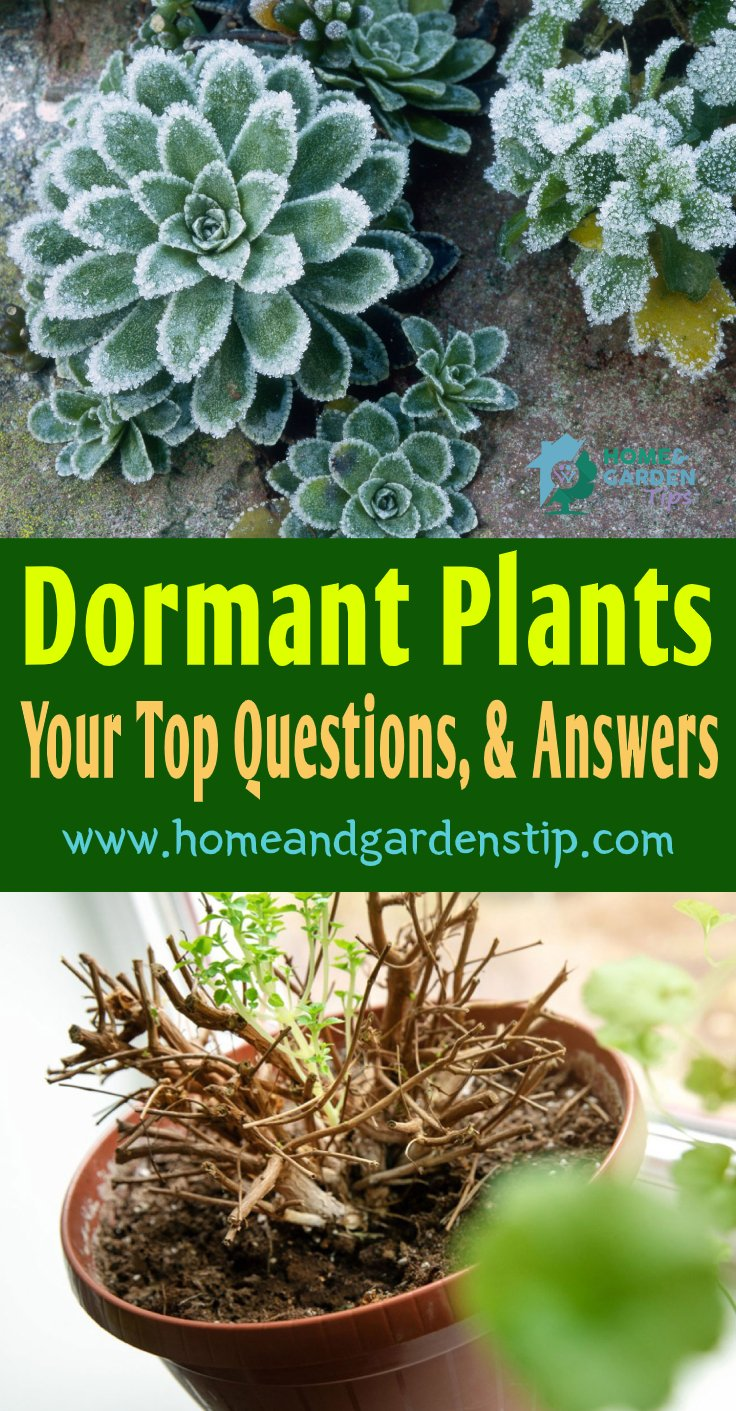 You are currently viewing Dormant Plants: Your Top Questions, and Answers