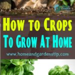 How to Crops To Grow At Home
