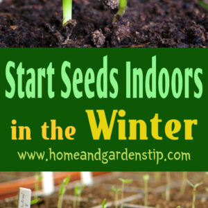 How to Start Seeds Indoors in the Winter