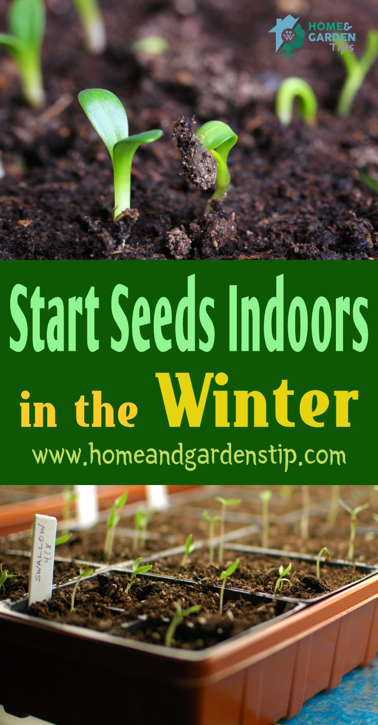 You are currently viewing How to Start Seeds Indoors in the Winter