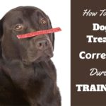 Importance of Motivation and Behavior in Dog Training
