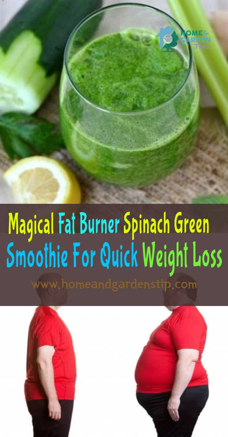 You are currently viewing Magical Fat Burner Spinach Green Smoothie For Quick Weight Loss