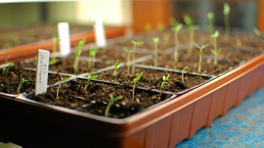 Start Seeds Indoors in the Winter