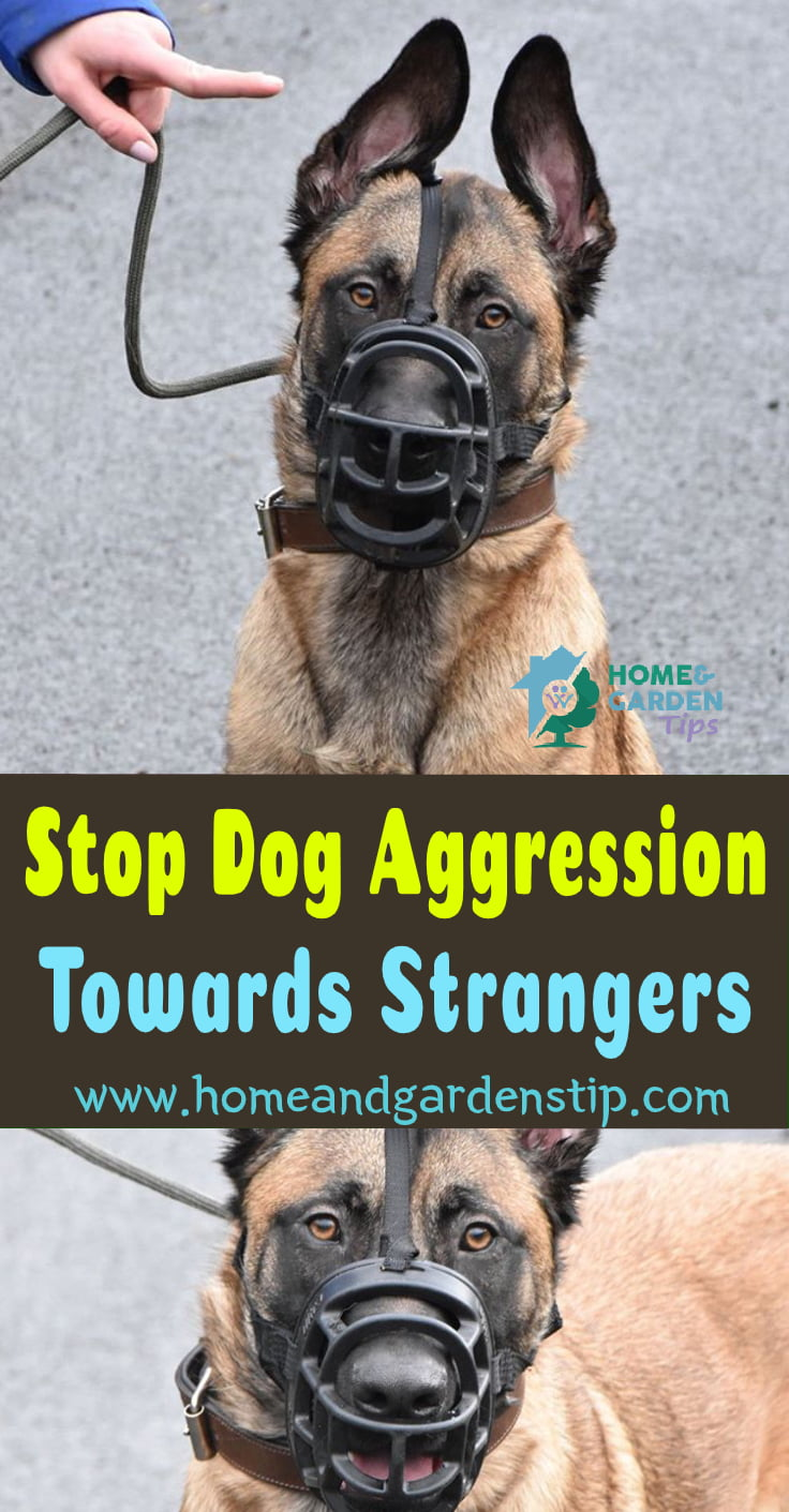Stop Dog Aggression Towards Strangers