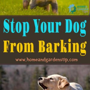 Stop Your Dog From Barking – Really