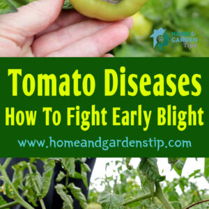 Tomato Diseases: How To Fight Early Blight