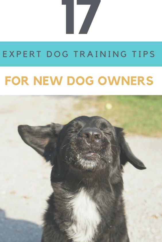Training Tips That Will Help You Train Your New Puppy