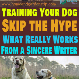 Training Your Dog – Skip the Hype – What Really Works – From a Sincere Writer