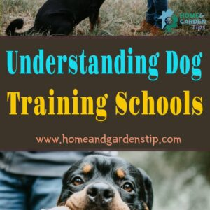 Understanding agility course for dogs