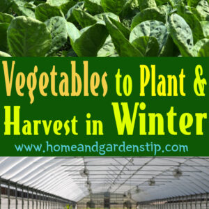 Vegetables to Plant and Harvest in Winter