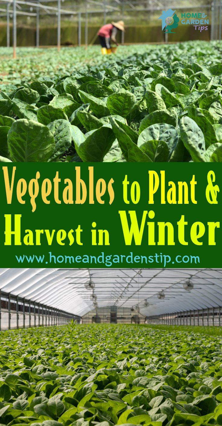 You are currently viewing Vegetables to Plant and Harvest in Winter