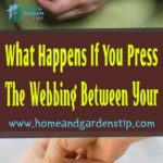 What Happens If You Press The Webbing Between Your Thumb And Index Finger?