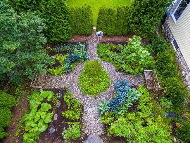 Plant trends for Small garden ideas in 2020