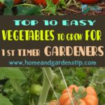 Top 10 easy vegetables to grow for first timer gardeners