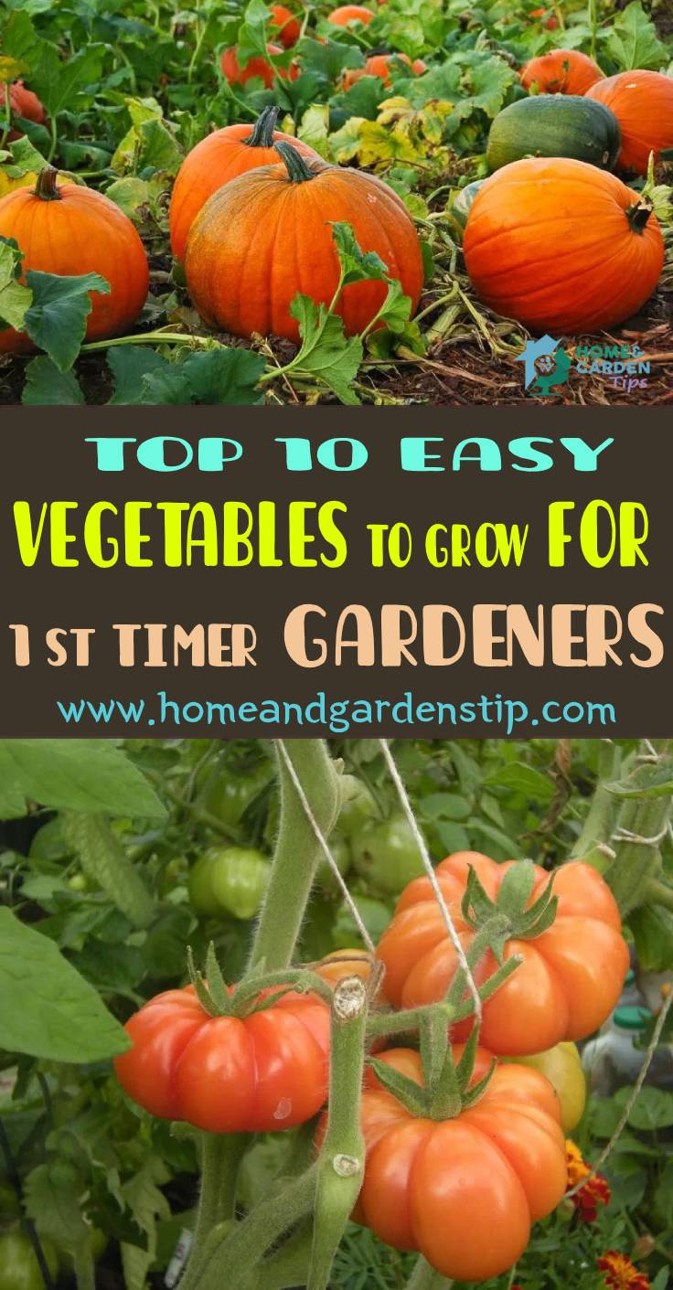 Top 10 Easy Vegetables To Grow For First Timer Gardeners Home