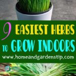 9 EASIEST HERBS TO GROW INDOORS