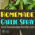 Homemade Garlic Spray: A Non-Toxic Insecticide