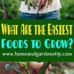 What Are the Easiest Foods to Grow?