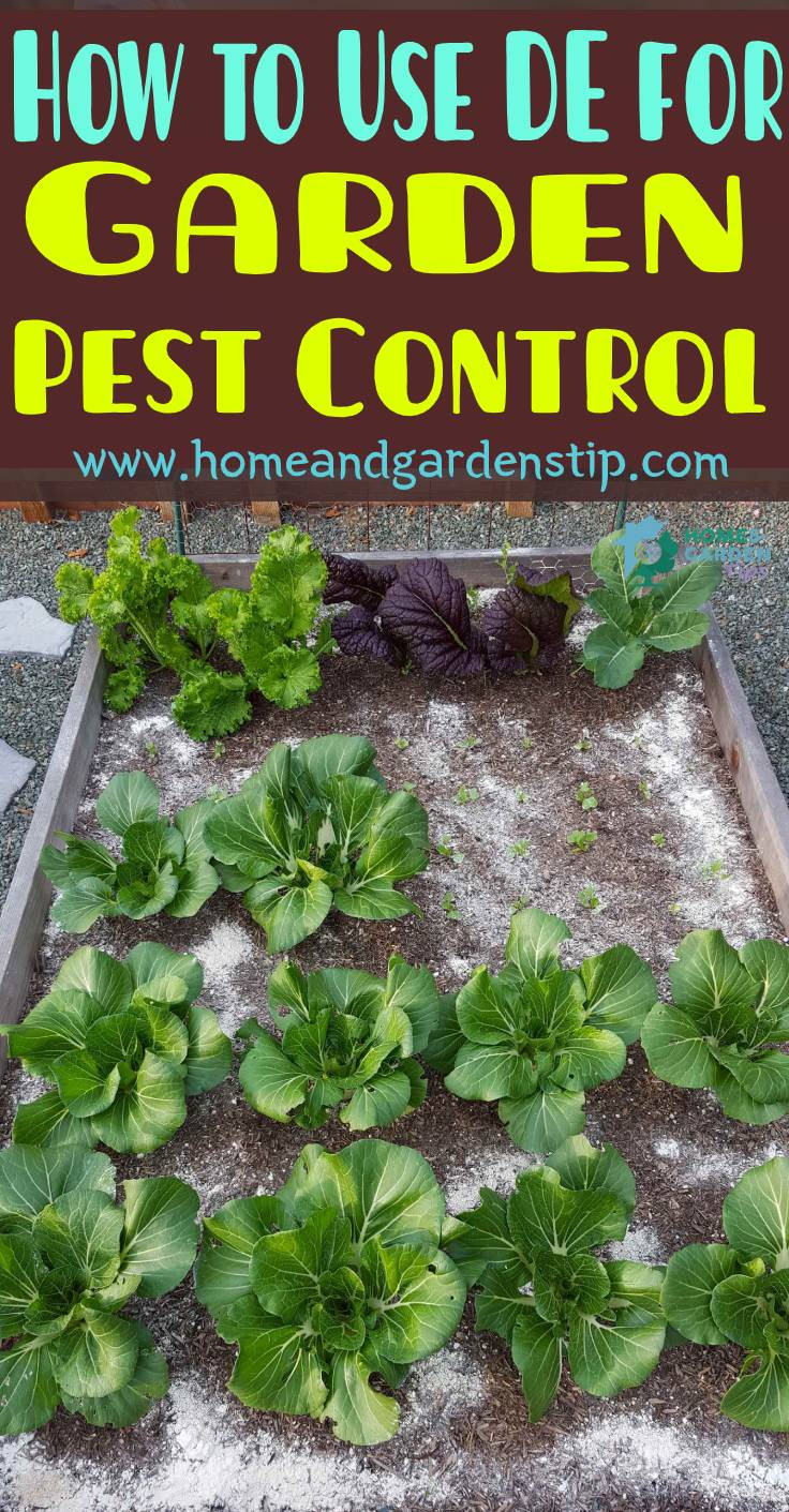 What Types of Pest Insects Does Diatomaceous Earth (DE) Kill?