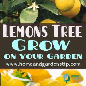 the best soil for the lemon tree that you Can Grow in your Garden