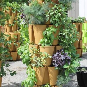 What Plants Can Grow Without Drainage?