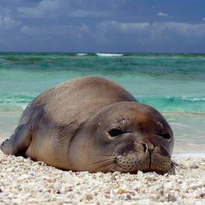 What are the most interesting seals?